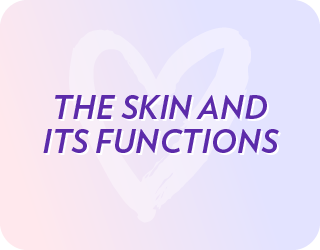 ProductTrainingVideosWebsite_theskinanditsfunctions
